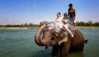 elephant bath in chitwan