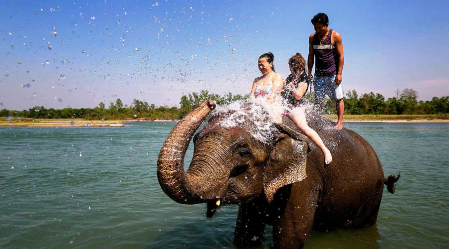 elephant riding, elephant bath in chitwan